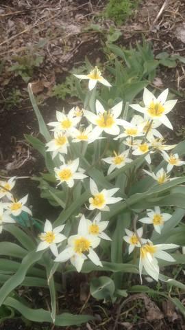 Весна идет!!! - Страница 30 21781574_m