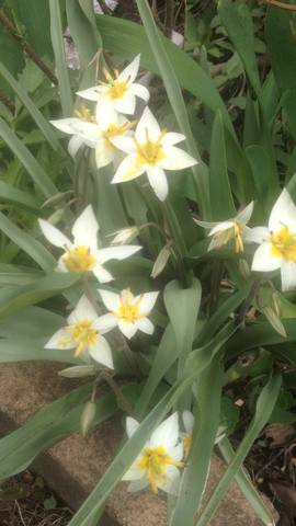 Весна идет!!! - Страница 30 21781605_m
