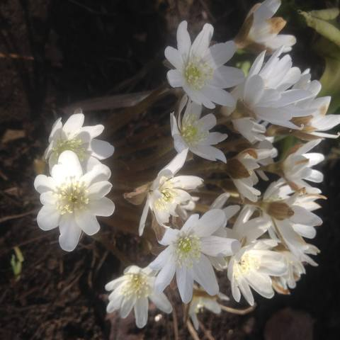 Весна идет!!! - Страница 30 21782462_m