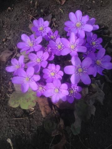 Весна идет!!! - Страница 30 21782528_m