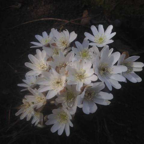 Весна идет!!! - Страница 30 21782651_m