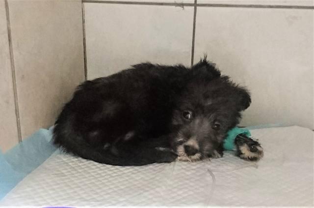 Четыре щенка из АДА борятся за жизнь!!! 21864597_m