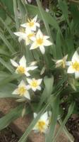 Весна идет!!! - Страница 39 21896429_s