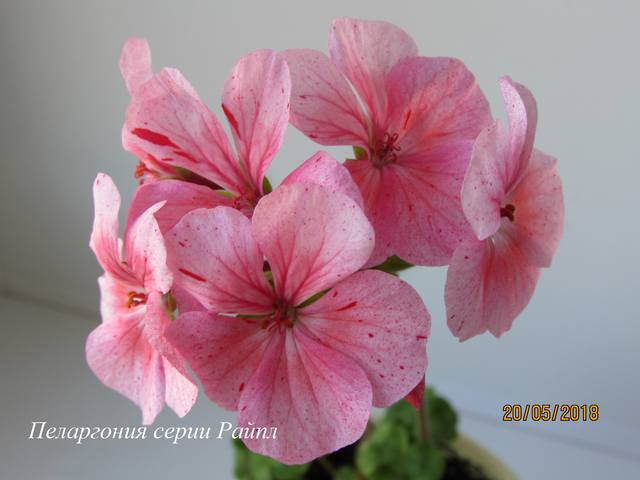 http://images.vfl.ru/ii/1527440842/607cbeda/21898250_m.jpg