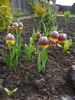 Весна идет!!! - Страница 2 21925392_s