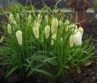 Весна идет!!! - Страница 2 21925396_s