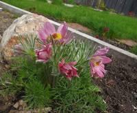 Весна идет!!! - Страница 2 21925411_s