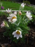 Весна идет!!! - Страница 2 21925420_s