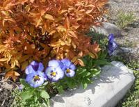 Весна идет!!! - Страница 2 21925444_s