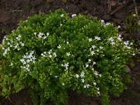Весна идет!!! - Страница 2 21925508_s