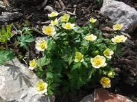 Весна идет!!! - Страница 2 21925547_s