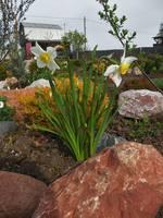 Весна идет!!! - Страница 2 21925615_s