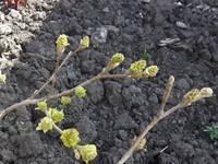 Весна идет!!! - Страница 2 21925709_s