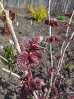 Весна идет!!! - Страница 2 21925723_s