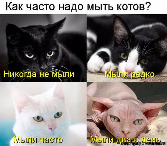 http://images.vfl.ru/ii/1528023637/6d13e866/21979111_m.jpg