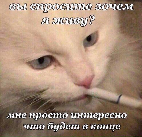 http://images.vfl.ru/ii/1528292917/655cc098/22021257_m.jpg