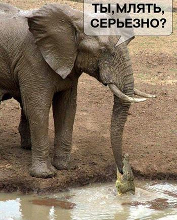 http://images.vfl.ru/ii/1528404090/cf62eeb7/22037201.jpg