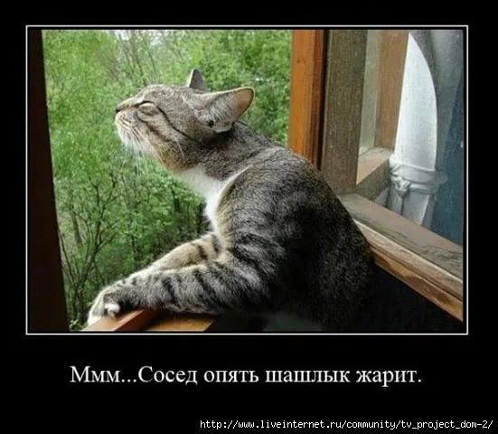 http://images.vfl.ru/ii/1528703029/db5e99f0/22071590_m.jpg