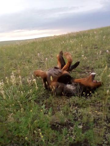 http://images.vfl.ru/ii/1528855459/eadc2b89/22094491_m.jpg