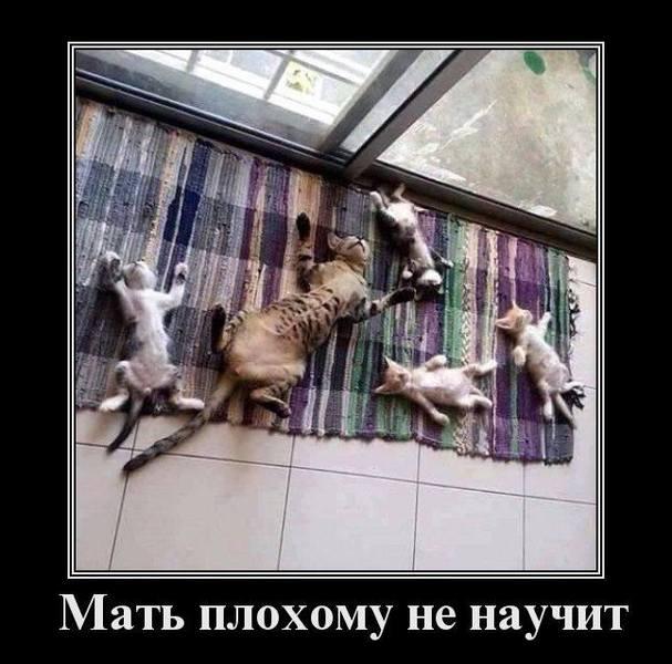 http://images.vfl.ru/ii/1530116012/ddaa7d87/22273263.jpg