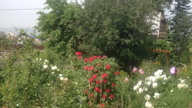 Розы цветут - Страница 13 22284870_m