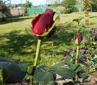 http://images.vfl.ru/ii/1530215640/086642b7/22288482_s.jpg