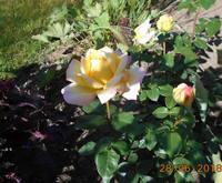 http://images.vfl.ru/ii/1530215641/05ebf2ee/22288484_s.jpg