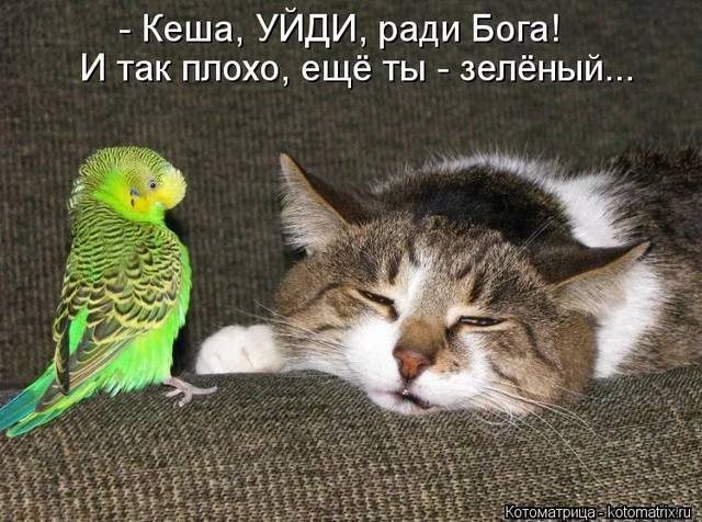 http://images.vfl.ru/ii/1530460630/54930dc2/22320049_m.jpg