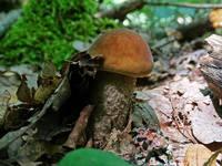 http://images.vfl.ru/ii/1530547999/e111d769/22331861_s.jpg