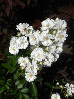 Розы цветут - Страница 14 22360790_s