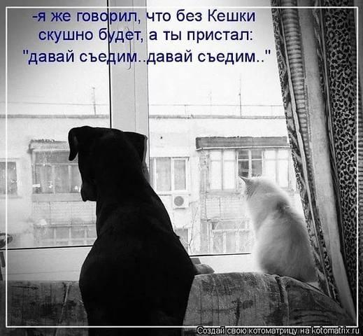 http://images.vfl.ru/ii/1530812094/cf11911e/22371116_m.jpg