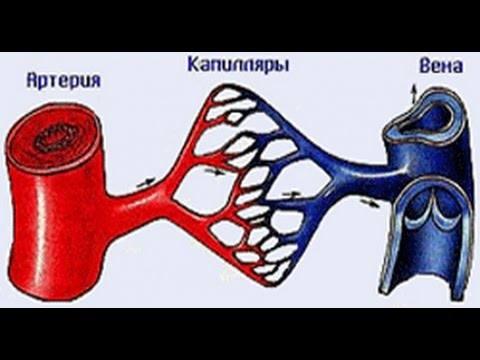 http://images.vfl.ru/ii/1530969538/918456b0/22391750_m.jpg