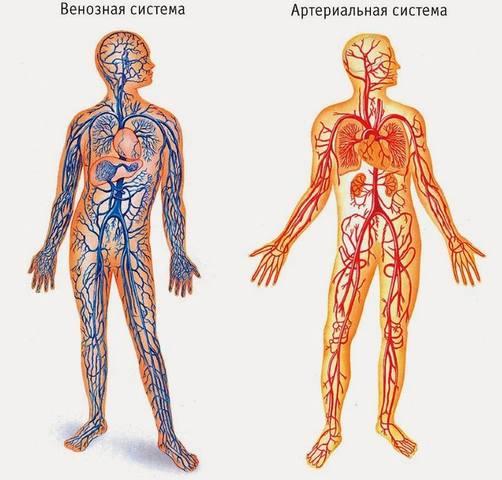 http://images.vfl.ru/ii/1530969622/07d7a6af/22391785_m.jpg