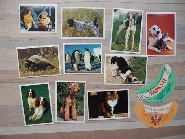 http://images.vfl.ru/ii/1531022284/2bc04caa/22397030_m.jpg