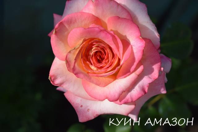 http://images.vfl.ru/ii/1531121438/f1d7e615/22410104_m.jpg