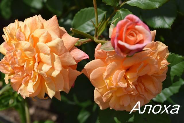 http://images.vfl.ru/ii/1531123381/f8256977/22410425_m.jpg