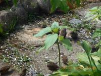 http://images.vfl.ru/ii/1531244029/224a7e78/22433000_s.jpg