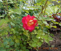 http://images.vfl.ru/ii/1531244681/c835e686/22433268_s.jpg