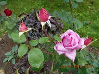 http://images.vfl.ru/ii/1531244840/e29706c9/22433312_s.jpg