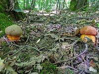 http://images.vfl.ru/ii/1531300484/2b5c3545/22441173_s.jpg
