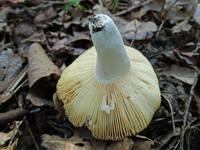 http://images.vfl.ru/ii/1531302355/807f6f9b/22441588_s.jpg