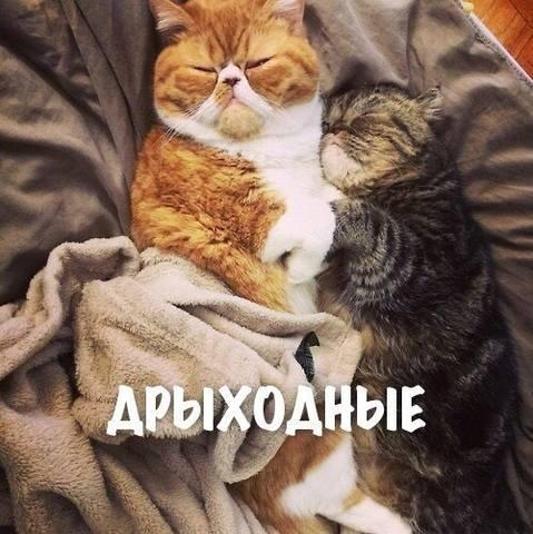 http://images.vfl.ru/ii/1531431614/b1cc51f8/22460143_m.jpg