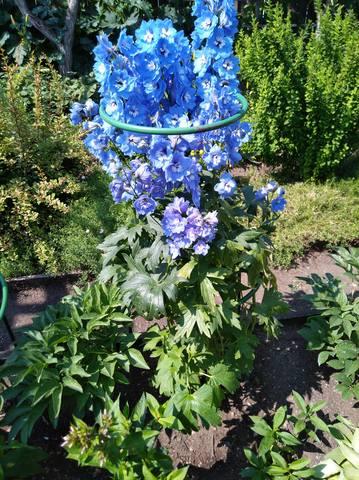 дела садовые - Страница 6 22461888_m