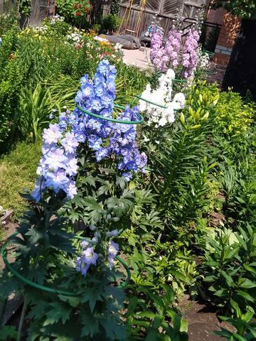 дела садовые - Страница 6 22461889_m