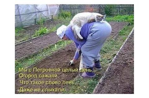 http://images.vfl.ru/ii/1531482185/02b8bb0c/22467980_m.jpg