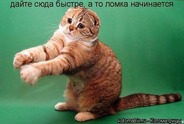 http://images.vfl.ru/ii/1531482381/d196c0ea/22468018_m.jpg