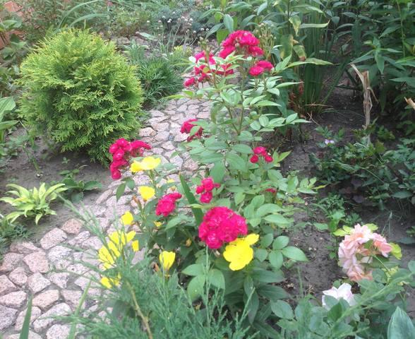 Розы цветут - Страница 15 22472347_m