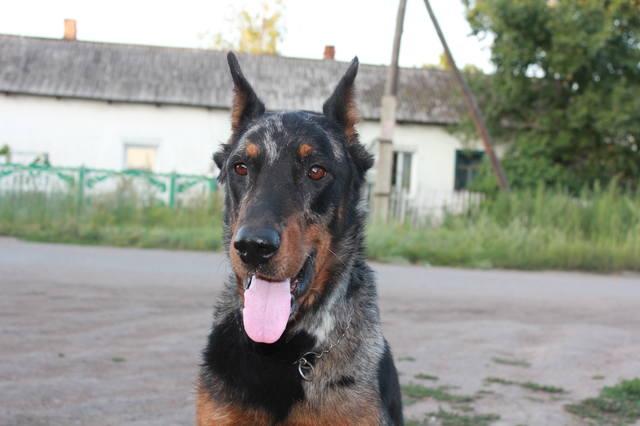 http://images.vfl.ru/ii/1533443173/823f5591/22762867_m.jpg