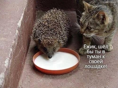 http://images.vfl.ru/ii/1533766359/b65c2cdc/22817793_m.jpg