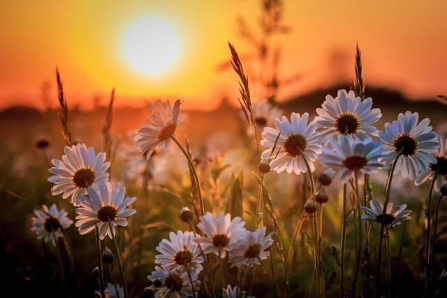Карта Желаний: Как Задать Вектор Своей Судьбы? Солнечное Затмение 13 июля 2018 года. 22836955_m